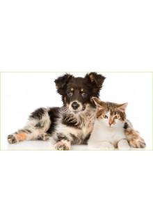 Állat kellékek